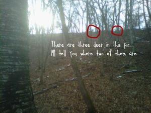 Deer 1a